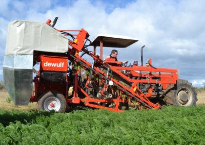 Dewulf top lifting carrot harvester